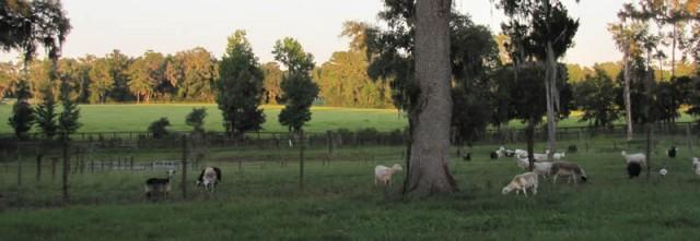 Calovine Farm